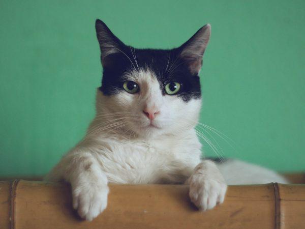 Tierische Nebenerzeugnisse sind nicht zwangsläufig schlecht. Gesetzlich ist es in Deutschland festgelegt, dass das Fleisch in Katzenfutter immer Lebensqualität haben muss. Bildquelle:  Manja Vitolic / 123rf