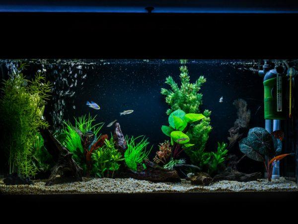 A shot of a 40 gallon, 3ft long tropical fish aquarium.