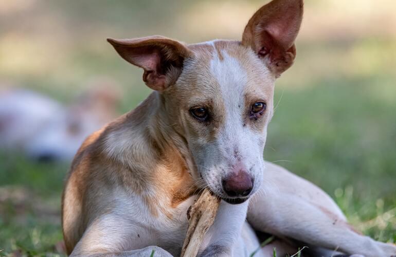 Das Bild zeigt einen Hund, der auf einem Knochen kaut.