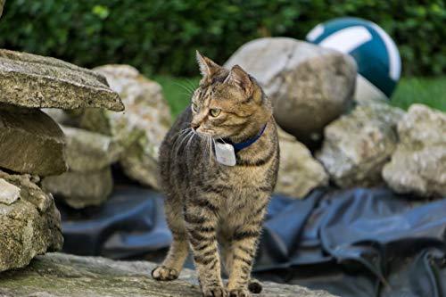 Girafus Katze Hund pro-TRACK-tor Tracker Peilsender Ortung und Sucher//Mini RF-Tracker (8g mit Batterie) ideal für Katzen Haustiere Hunde//Ortung in Räumen möglich - 2 Sender (für 2 Haustiere)
