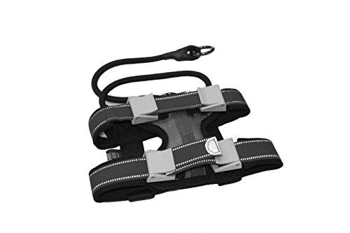 Cesar Millan Pack Leader Collar™ - Trainingshalsband des Hundeflüsterers (Groß)